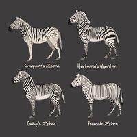 Zebra Chart by Citron--Vert