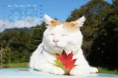 かご猫 〜cafe:2016年09月カレンダー〜  ひらひらり 紅葉時計の しめす秋…長月