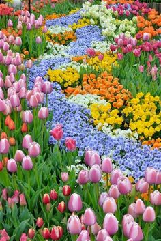 Awesome 55 Beautiful Flowers Garden Landscaping Ideas for Spring Informations About 55 Beautiful Flo Tulips Garden, Garden Bulbs, Planting Flowers, Beautiful Flowers Garden, Pretty Flowers, Beautiful Gardens, Beautiful Beautiful, Small Flowers, Flower Garden Design