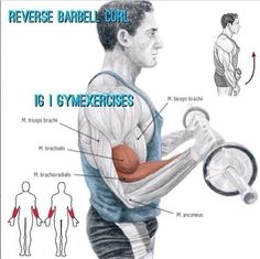 Reverse barbell curl Forearm Workout, Biceps Workout, Gym Workouts, Fitness Exercises, Crossfit, Gym Program, Barbell Curl, Men's Health Fitness, Workout Guide