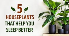 The five best houseplants that help you sleep better