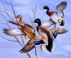 waterfowl | ... Waterfowl Paintings Original Waterfowl Paintings by Jim Killen
