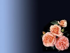 Free Wedding Rings And Roses Backgrounds For PowerPoint - Beauty ...