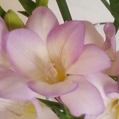A #litlemore #near?. Un poco más #cerca? #felizdomingo #happysunday#friends #freshflowers#fresia#lavanda #flowers#style#beautifulhouses#events#floristeriasmadrid#flordelola#condeduquegente#I4I#instalovers#instapic#picoftheday. by flordelola2014