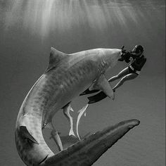 sea life - sea life photography - sea life underwater - sea life artwork - sea life watercolor sea l Image Avion, Planeta Animal, Shark Pictures, Shark Art, Great White Shark, Ocean Creatures, Orcas, Shark Week, Underwater World