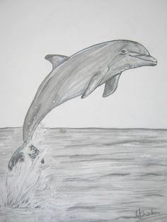 Dolphin A4 graphite,
