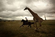 giraffe, horse and a woman under grey skies