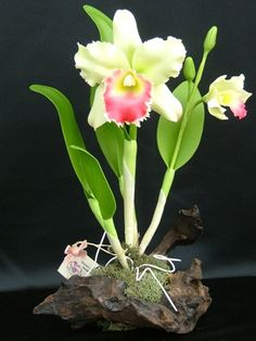 Making Clay Flowers (great orchids) http://mysite.verizon.net/clayorchids/id25.html