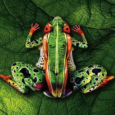 Bodypainting artist Johannes Stötter is known for his groundbreaking work in the realm of bodypaint art. His creation of a tropical frog . Illusion Kunst, Illusion Art, Johannes Stötter, Frosch Illustration, Frog And Toad, Reptiles And Amphibians, Nice Body, Oeuvre D'art, Amazing Nature