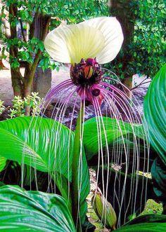 Magnificient Flower