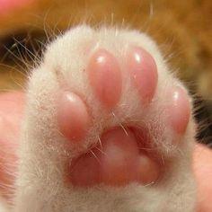 patinha de gatinho