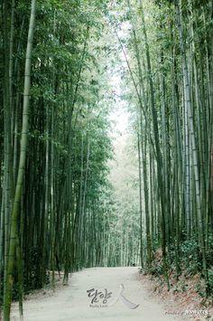 죽녹원 (juknokwon, 竹綠苑)  - Bamboo Forest, Damyang Korea