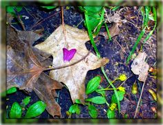 """""""Love For Nature"""" By Angel L'Amour"""