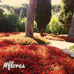 flores en el jardín histórico de El Capricho