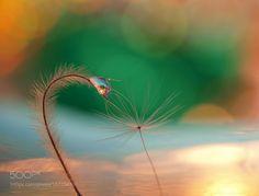 Shine on my friend by miss_gecko. @go4fotos