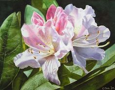 'Dancing Rhodie' - #watercolor #painting. This painting was a finalist in the International Art Magazine #flower #competition some time ago.  #rhododendron #watercolorflowers #floral#realisticart #decoration#wallart #instaart #kunst #blumen#flowerpainting #internationalart#commission #fineart#paintingmakesmehappy #paint#happymonday#havefun #artwork #artworld#nature_perfection #garden#artforsale #artforthehome