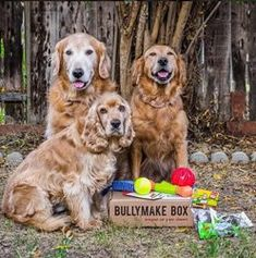 What Kind Of Chewer Is Your Dog? – Bullymake Box – A Dog Subscription Box For Power Chewers!