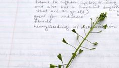 One Herb at a Time: 7 Ways to Inspire Your Herbal Studies