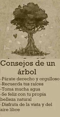 Consejos de un árbol | Frases y citas celebres #consejosdeamor