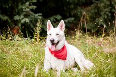 Bodhi_Sit! Stay Pet Photography-18