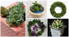 smoothfoam succulent planters wreaths