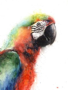 Macaw Framed at Whistlefish - handpicked contemporary & traditional art that is high quality & affordable. Watercolor Bird, Watercolor Artwork, Scarlet, Parrot Painting, All Nature, Tropical Art, Bird Art, Printable Wall Art, Original Paintings