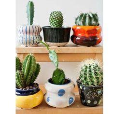 Como vai essa Quinta feira com cara de Segundona?  A melhor parte é que amanhã é Sextaaa!  #lardocecasa #cactus #suculentas #plantas #decor #homedecor