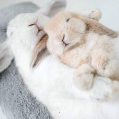 Cute Animal Videos, Cute Animal Pictures, Cute Little Animals, Cute Funny Animals, Cute Baby Bunnies, Cute Babies, Fluffy Animals, Animals And Pets, Fluffy Bunny