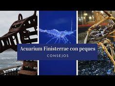 Acuario Finisterrae ¿es para los más peques? | Consejos | Trucos de Familia - YouTube Youtube, Pisces, Home, Travel Tips, Aquarium, Youtubers, Youtube Movies