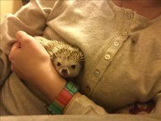 Grumpy little prickle)