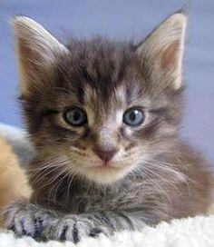 he is cute. Good Morning Kitten - Shaggy [redux] - September 09, 2012 - Inbox - 'att.net Mail'