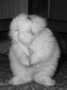 Tenderness   Flickr - Photo Sharing!