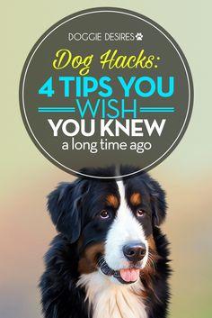 4 dog hacks you wish you knew a long time ago >> http://doggiedesires.com/dog-hacks/