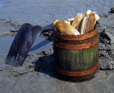 Razor Clams, Long Beach Peninsula WA - <3 razor clam digging. look at those beauties! Heading there 4/25