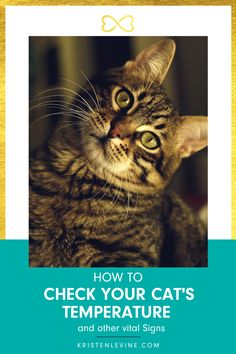 It is a good idea to practice taking your cat's temperature even when she is healthy. This gives you a reliable baseline to gauge her general health and catch problems early. Read how you can do that at home in my latest blog post. #cat #cathealth #pethealth #healthypets