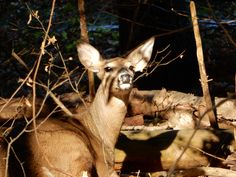 Kangaroo, Giraffe, Ohio, Deer, Animals, Baby Bjorn, Felt Giraffe, Columbus Ohio, Animales