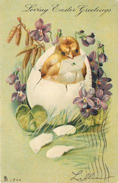 LOVING EASTER GREETINGS chick in egg with envelope , violets & catkins surround
