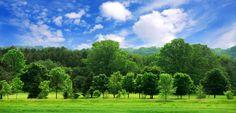 Los cambios climáticos engendran un crecimiento anormal de los árboles en el hemisferio sur - http://www.renovablesverdes.com/los-cambios-climaticos-engendran-un-crecimiento-anormal-de-los-arboles-en-el-hemisferio-sur/