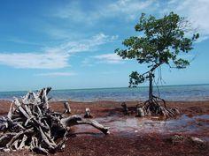 Big Munson Island, Florida Keys Boy Scout Sea Base