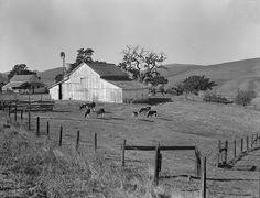 Small Farm of California, Contra Costa County by Dorothea Lange