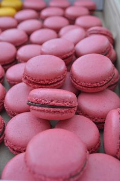 Esses são de Chocolate...irresistíveis!