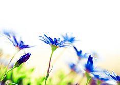 Flower Photography... beautiful!
