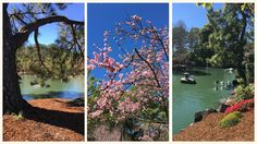The Japanese Gardens are gorgeous and great for kids to visit too. Sydney Gardens, Moon Gate, Japanese Gardens, Playgrounds, Japanese Style, Auburn, Waterfalls, Botanical Gardens, Parks
