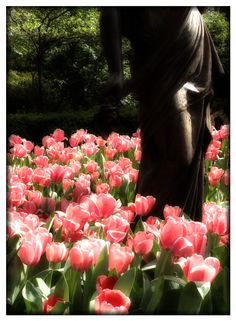 Tulips and statue at Dixon Gardens in Memphis TN.