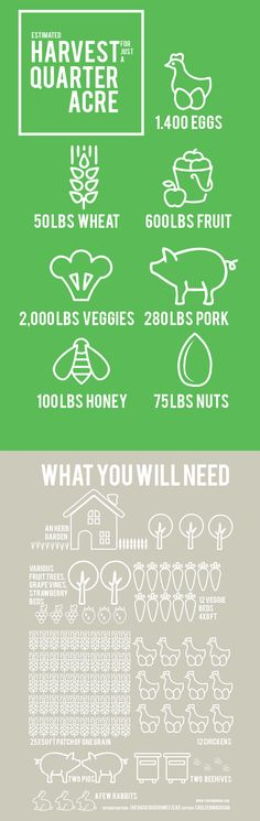 You can homestead on just a quarter of an acre and this is what you have the potential to harvest!