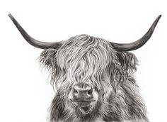 Explore collection of Highland Cow Drawing Highland Cow Tattoo, Highland Cow Art, Scottish Highland Cow, Highland Cattle, Cow Sketch, Cow Drawing, Sweet Cow, Fluffy Cows, Cow Painting