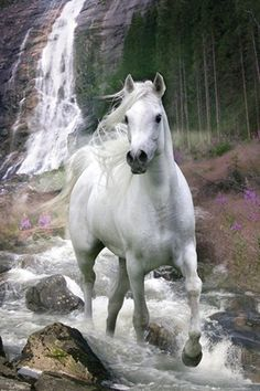 Signal-to-noise ratio- I chose this white horse over a picture of a zebra because there is little noise compared to a stripped zebra. There aren't unnecessary elements involved with the white horse. Cute Horses, Horse Love, Most Beautiful Animals, Beautiful Horses, Beautiful Pictures, Beautiful Things, Horse Posters, Majestic Horse, All The Pretty Horses