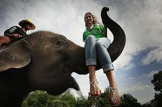 Elephant Tourism in Thailand Is Fueling a Deadly Black Market in Baby Pachyderms | TakePart