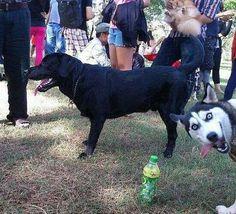 Column dog photobomb 6