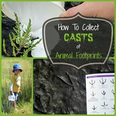 Animal footprint casts: get creative with your kids as you find tracks made by everything from dogs, cats and big black crows to raccoons, skunks and coyotes. Use with Apologia Zoology, Apologia Land Animals Nature Activities, Animal Activities, Spring Activities, Science Activities, Activities For Kids, Science Nature, Scout Activities, Animal Footprints, Girl Scout Camping